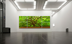 This majestic Southern live oak (Quercus virginiana) is estimated to be more than 500 years old, and covering over 17,000 square feet.  At a resolution of over 120 megapixels, the resolution is outstanding, and I am pleased to offer this unique 5 panel mosaic presentation which can be printed over 10 feet wide.<br />