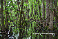 63895-15102 Swamp along Snake Road LaRue Pine Hills Otter Pond Natural Area Shawnee National Forest Union Co. IL