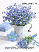 Alfredo, FLOWERS, BLUMEN, FLORES, photos+++++,BRTOLMN54544,#f#, EVERYDAY