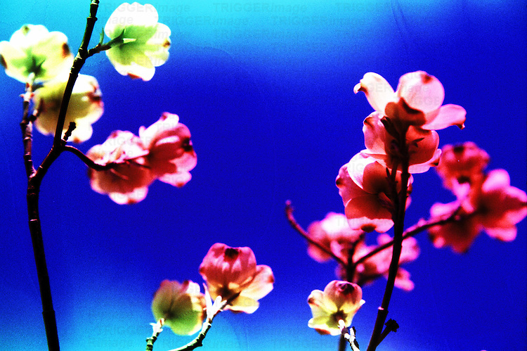 Small pink flowers against a blue background