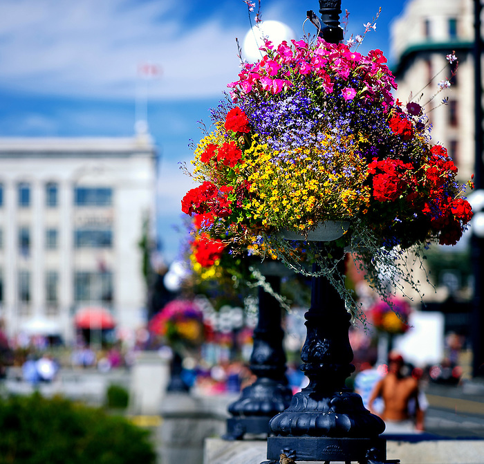 Beautiful flower pots all over Victoria BC - These are at the Harbour