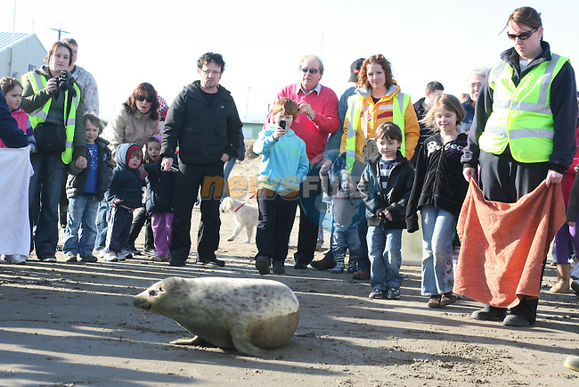 Chloe the seal is released in to the sea at Clogherhead...Photo NEWSFILE/Jenny Matthews.(Photo credit should read Jenny Matthews/NEWSFILE)....This Picture has been sent you under the condtions enclosed by:.Newsfile Ltd..The Studio,.Millmount Abbey,.Drogheda,.Co Meath..Ireland..Tel: +353(0)41-9871240.Fax: +353(0)41-9871260.GSM: +353(0)86-2500958.email: pictures@newsfile.ie.www.newsfile.ie.FTP: 193.120.102.198.