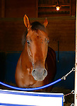 Candy Ride, the Argentinain bred thoroughbred, rests in his stall before going out to win the 2003 Pacific Classic with Julie Krone aboard, at the Del Mar Thoroughbred Club in Del Mar, California,