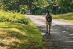 Woman hiking to Dana Common in The Quabbin Reservoir