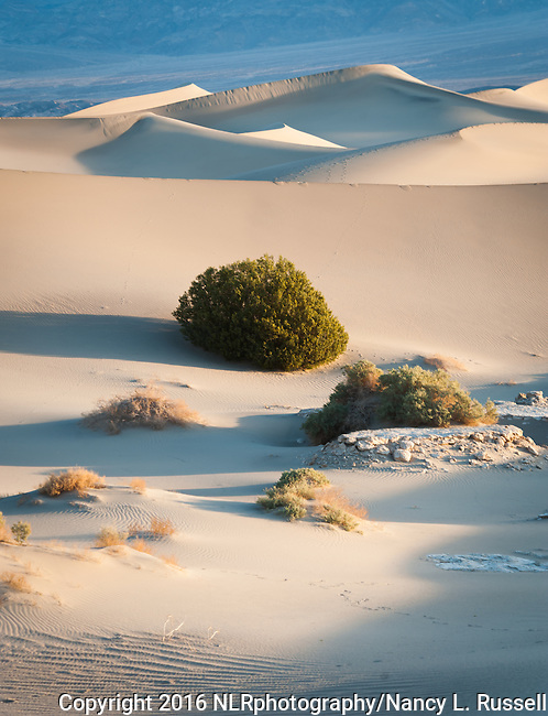 Plants and Sand in Mesquite Flats in Death Valley
