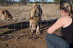 A staff member looks at lions during a tour at Boskoppie Lion and Tiger reserve on August 7 2015 in Kroonstad. South Africa. The farm has about 100 lions, some tigers and a few jaguars. South Africa has hundreds of breeding farms for lions and many of the animals are sold to hunting companies that use them for canned hunting. There are about 8000 lions in captivity and only around 2000 in the wild in South Africa. (Photo by: Per-Anders Pettersson)