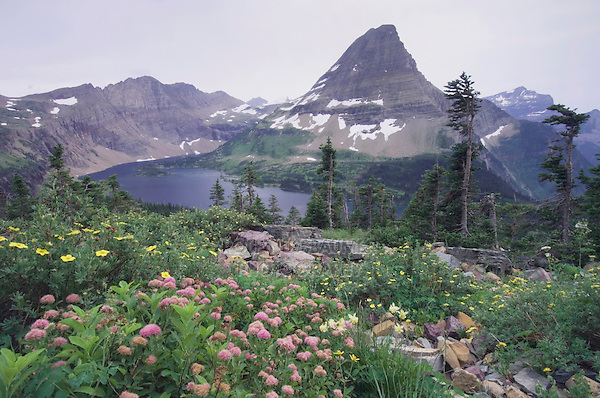 Wildflowers and Hidden Lake,Shrubby Cinquefoil,Yellow Columbine,White Spiraea, Glacier National Park, Montana, USA, July 2007