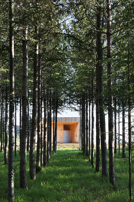 The house has been built on a patch of land sheltered by serried ranks of fir trees