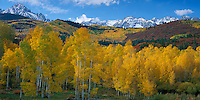 Uncompahgre National Forest, CO<br /> Snow capped San Juan range above the autumn colors in Dallas Creek valley