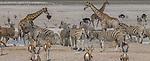 Ongava Reserve, Namibia