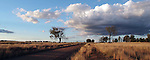 Rural Landscape - Western NSW