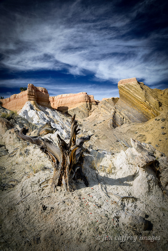 An ancient juniper stump stands alone in the rocky landscape of the Ojito Wilderness in New Mexico's San Juan Basin.