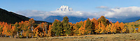 Mount Moran clears the clouds on this crisp fall day in Grand Teton National Park. Panoramic. Above Oxbow Bend, Grand Teton NP.