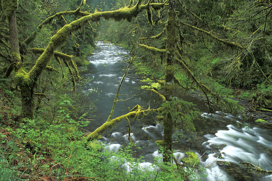 Eagle Creek, Eagle Creek Trail, Columbia River Gorge, Portland, Oregon