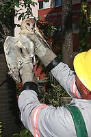 """Coruja é resgatada pelo corpo de bombeiros em área urbana.<br /> Coruja-das-torres, coruja-da-igreja, rasga-mortalha (Maranhão, Pernambuco) ou suindara, é uma espécie de coruja muito comum no Brasil, bastante conhecida por nidificar em torre de igrejas e locais habitados (razão de um de seus nomes comuns).<br /> Está entre as aves mais """"úteis"""" do mundo, no que se refere à economia do homem, pois consomem muitos roedores, principalmente nas proximidades de habitações humanas.<br /> <br /> O nome suindara vem do tupi e significa """"o que não come"""".<br /> <br /> Seu nome significa:Tyto Furcata⇒ Coruja branca [com rabo de] pontiagudo**.<br /> <br /> Obs: Modificado recentemente (2014). Antiga Tyto alba ⇒ Coruja branca.<br /> Belém, Pará, Brasil.<br /> Foto Carlos Borges"""