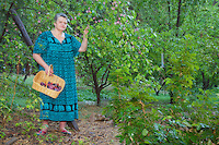Kathy Gorzny picking plums in her orchard