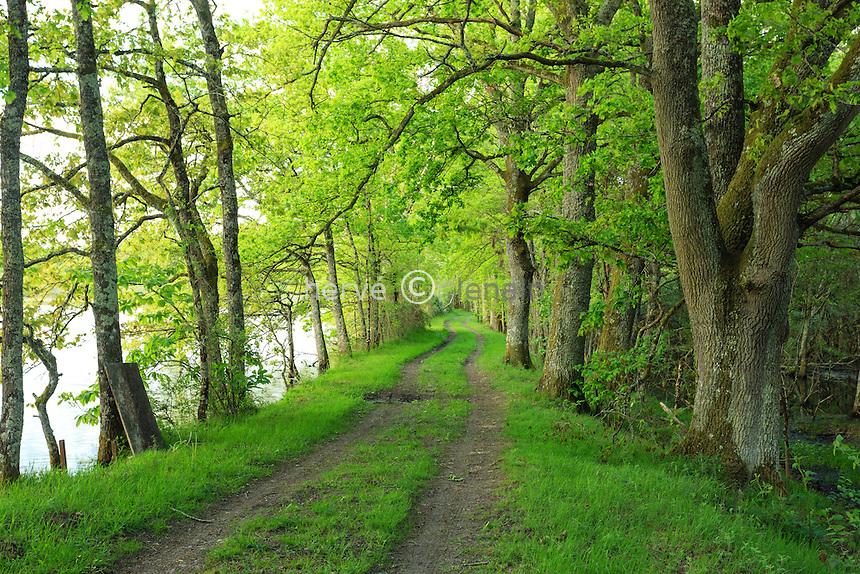 France, Loir-et-Cher (41), Sologne, Saint-Viâtre, chemin en bordure d'étang // France, Loir et Cher, Sologne, Saint Viatre, path in the forest