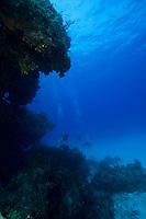Divers exploring coral reef off Eleuthera, Bahama Islands
