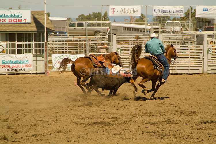 Calf roping, Deschutes County Fair and Rodeo, Central Oregon