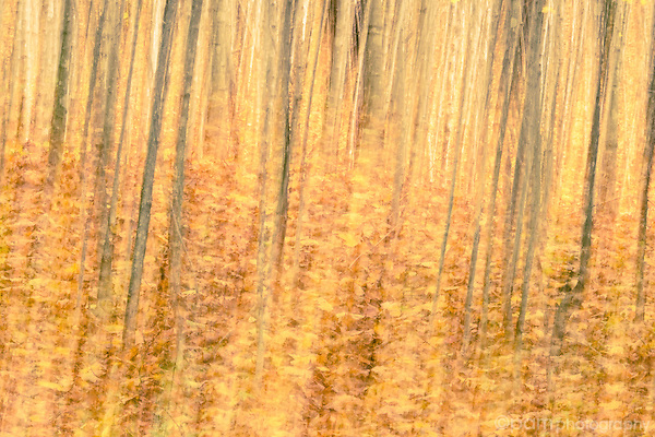 Abstract image of fall leaves and trees.