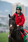 SHA TIN, HONG KONG – December 5:Prince Of Arran at trackwork on December 5 at Sha Tin Race Course in Hong Kong before starting in the Longines Hong Kong Vase. Michael McInally/Eclipse Sportswire/CSM