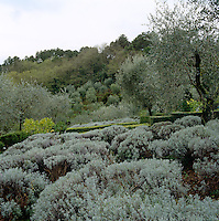 A view of the garden over the lavender beds