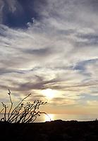 Ocotillo Desert of Sonora. Ocotillo. Desierto de Sonora. Sunset in the Sea of Cortez, Gulf of California.<br /> atardeser en el mar de cortez, golfo de california.<br /> Fouquieria splendens is a species within the genus Fouquieria of the family Fouquieriaceae. It is a flower plant adapted to live in the deserts of the southwest...<br /> <br /> Fouquieria splendens es una especie dentro del g&eacute;nero Fouquieria de la familia Fouquieriaceae. Se trata de una planta de flor adaptada a vivir en los desiertos del suroeste. <br /> (Photo:Isrrael Garnica/NortePhoto)