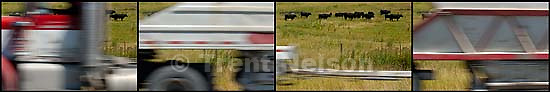 Cattle and cars along Highway 91 north of Smithfield. Air quality issues.<br />