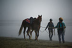 Horse on the beach in Crescent City California