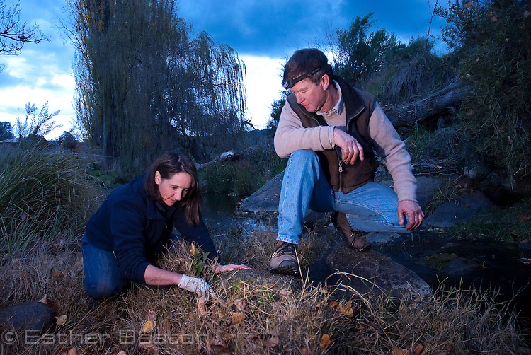 Kylie Durrant of Murray Catchment Authority helping Ian Bell, owner of property 'Willowvale' searching Maragle Creek, where Booroolong Frog occurs, Tumbarumba, New South Wales
