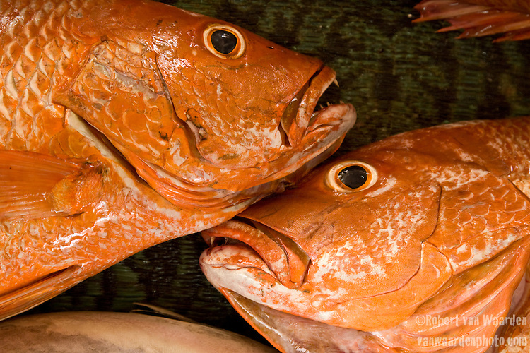 Orange Sea Bass - Oman - National Geographic Traveler