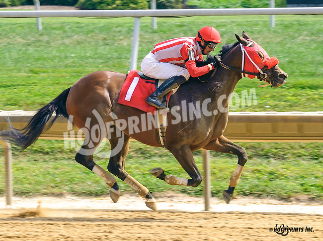 Majestic Hope winning at Delaware Park on 9/8/16