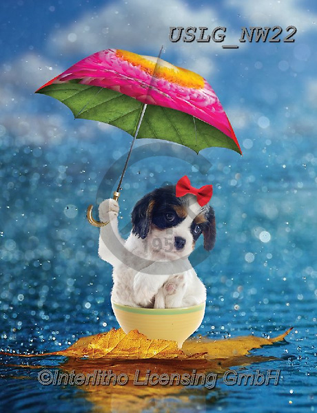 PAUL,REALISTIC ANIMALS, REALISTISCHE TIERE, ANIMALES REALISTICOS, paintings+++++NW_Umbrella-Dog-J,USLGNW22,#a#, EVERYDAY ,funny photos