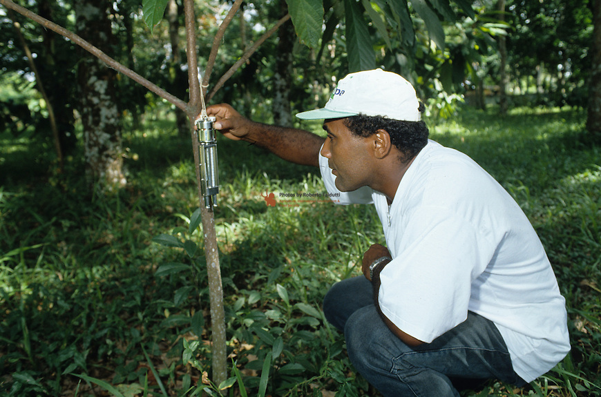 Technician measuring humidity of wild plant (Teodroma grandiflora)