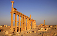 Along the Cardo Maximus or main street, 1.2 kms in length with porticoes at each end, 2nd century AD, Palmyra, Syria. In Roman city-planning, the Cardo Maximus runs north-south, intersecting with the east-west Decumanus Maximus Picture by Manuel Cohen