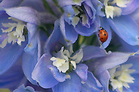 The Ladybug of the Garden, Palace of Versailles, France