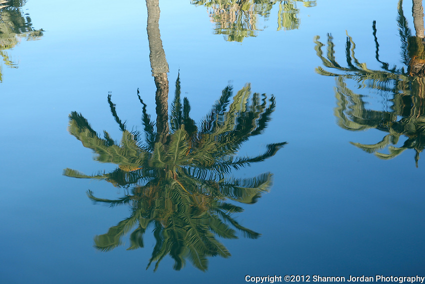 Palm trees are reflected in the water of the Santa barbara Harbor.