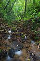 A rainforest stream, habitat of the Golfodulcean Poison Frog {Phyllobates vittatus}. Osa Peninsula, Costa Rica. May.