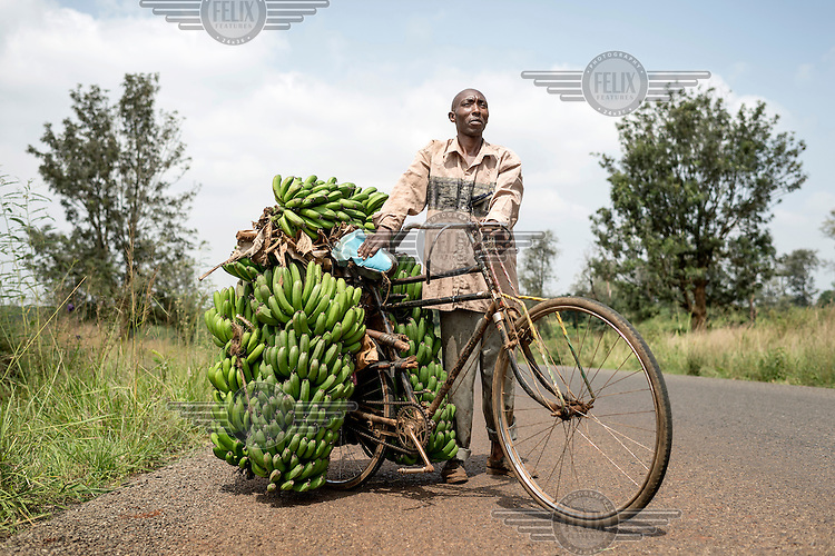 Francis Mwuhia, 37 years old, who is married with three children and works as a banana trader and transporter. Each day he travels from his home village of Kibichoi to Ruiru, approximately eight kilometres, to sell the bananas he bought in his village. Depending on size, weight, quality he pays around Ksh 180 (GBP 1.13) per hand and sells them for about Ksh 400 (GBP 2.50) a hand in Ruiru's market. He can load his bicycle, which he bought in 2002, with up to 180 kg of bananas. The road to Ruiru is hilly. He has to push his bicycle and its load up-hill but when riding downhill he must beware as his bicycles brakes and tyres are old and worn.