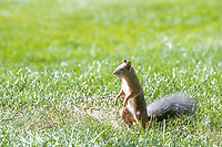Squirrel watches second round at the Omega European Masters, Golf Club Crans-sur-Sierre, Crans-Montana, Valais, Switzerland. 30/08/19.<br /> Picture Stefano DiMaria / Golffile.ie<br /> <br /> All photo usage must carry mandatory copyright credit (© Golffile | Stefano DiMaria)