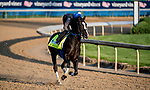 LOUISVILLE, KENTUCKY - APRIL 27: Long Range Toddy, trained by Steven Asmussen, exercises in preparation for the Kentucky Derby at Churchill Downs in Louisville, Kentucky on April 27, 2019.  Scott Serio/Eclipse Sportswire/CSM