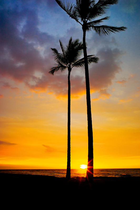 Palm trees and sunset. Hawaii, The Big Island.