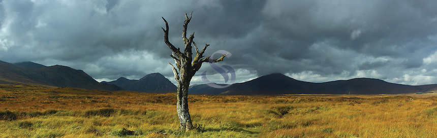 Dead tree on Rannoch Moor looking towards Buachaille Etive Mor and Beinn a Chrulaiste, Glencoe, Highlands<br /> <br /> Copyright www.scottishhorizons.co.uk/Keith Fergus 2011 All Rights Reserved