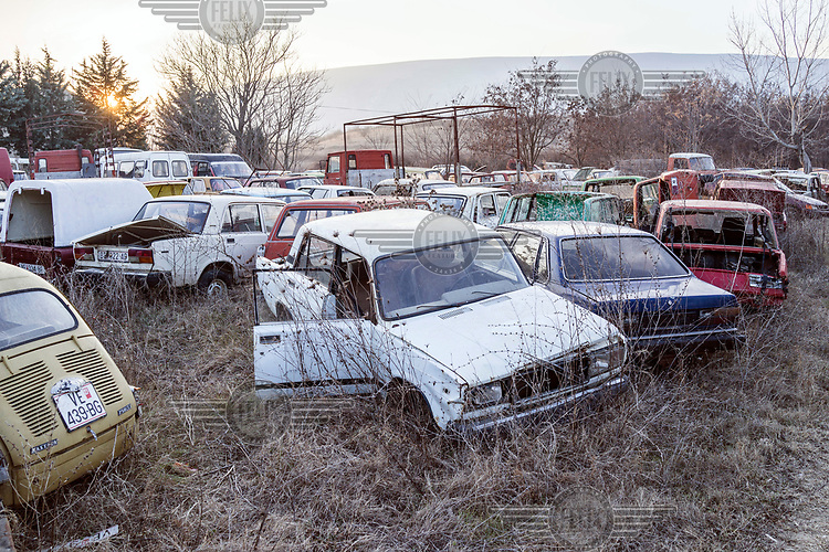 Abandoned cars, falling apart in the undergrowth.