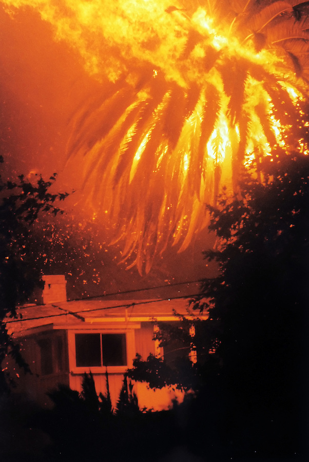 Palm tree instantly bursts into flames on Pacific Coast Highway south of Malibu as the firestorm reaches it. The house survived as it was at the bottom of the mountain side. Nothing above it survived except an elderly couple who jumped into their swimming pool with towels over their heads as the firestorm blew past with winds estimated at 50 mph.  copyright Jim Mendenhall, The Los Angeles Times, 1993.