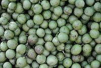 Mamoncillos, mamones, huaya, guaya, guayum, maco, quenepa, papamundo, limoncillo, mamón, mamoncillo, Melicoccus, bijugatus. Photo: VizzorImage/CONT