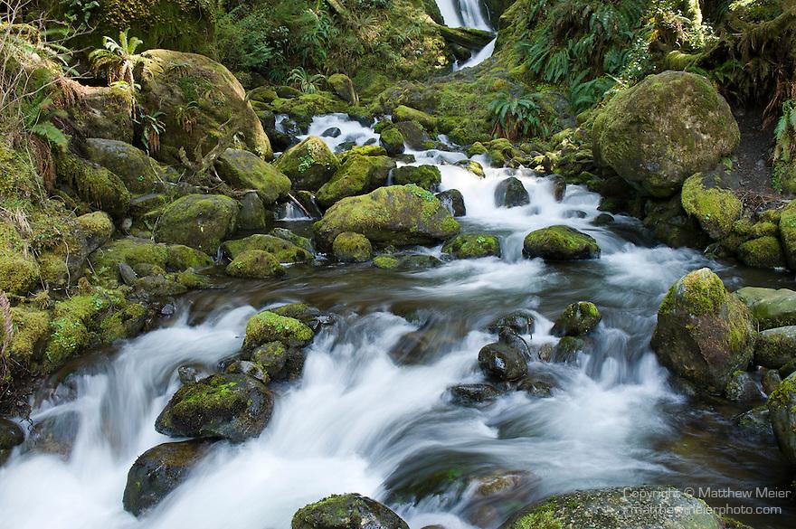 Bunch Creek, Quinault Rain Forest, Washington; Bunch Creek Falls