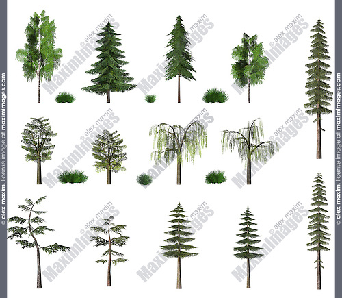 Summer tree models collection birch oak pine fir trees texture isolated on white baclground