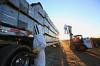 At nightfall, the hives are put in the truck with a forklift. Modern apiculture is palletized; it can manage considerable stock, numerous migrations... Dave Hackenberg climbs onto the hives to install protective netting that will prevent the bees from leaving their hive during the long journey to the West Coast.