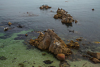 Low Tide, Pacific Grove